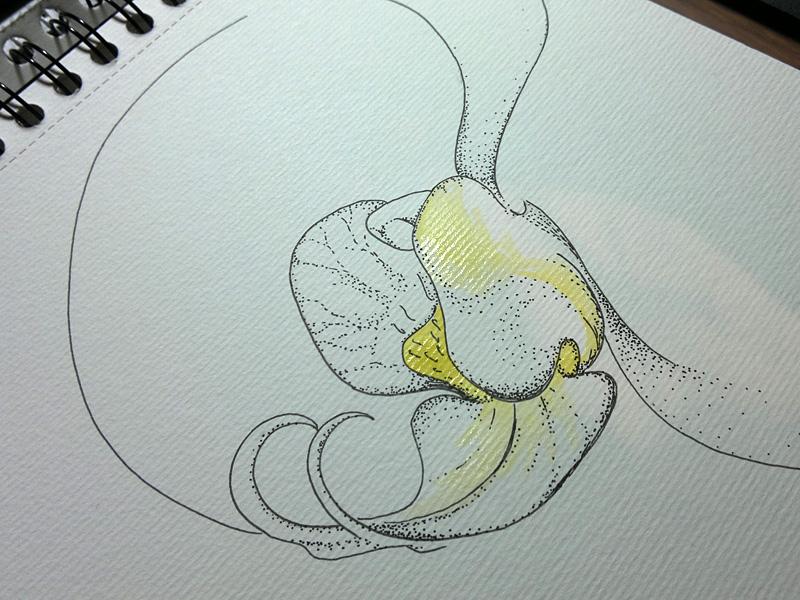 Tuschezeichnung Orchideen-Blüte
