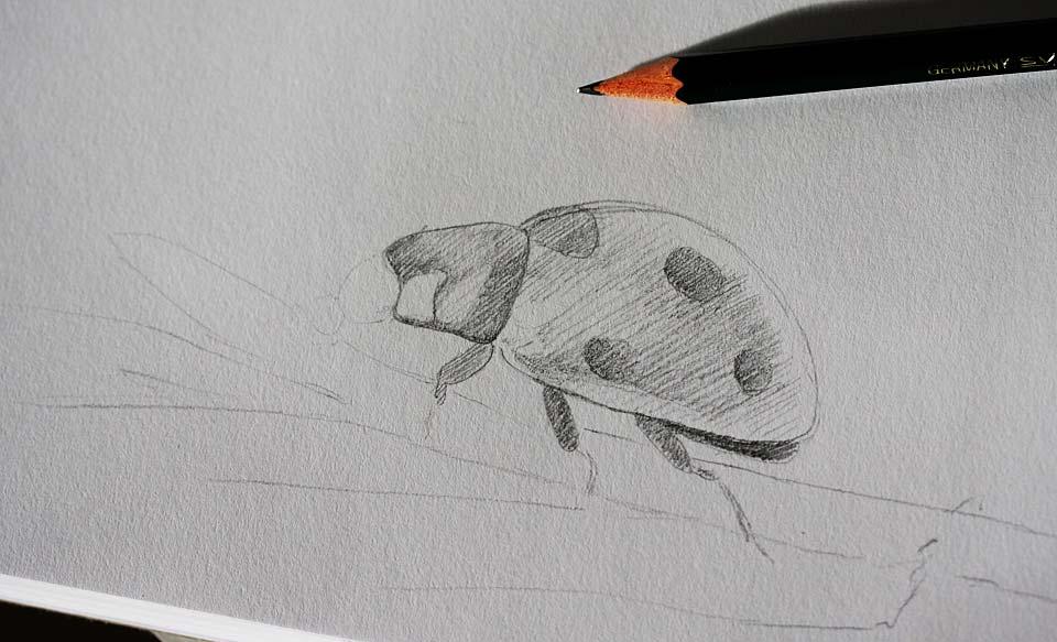 Marienkäfer-Zeichnung mit Bleistift - Der Anfang...