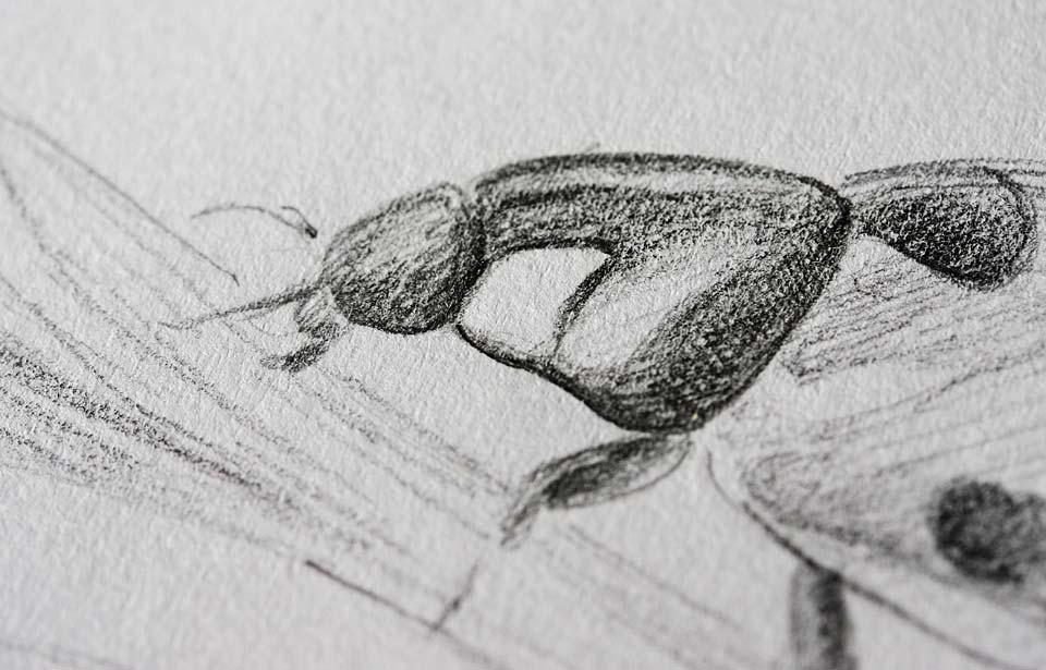 Der Kopf des Marienkäfers als Detail