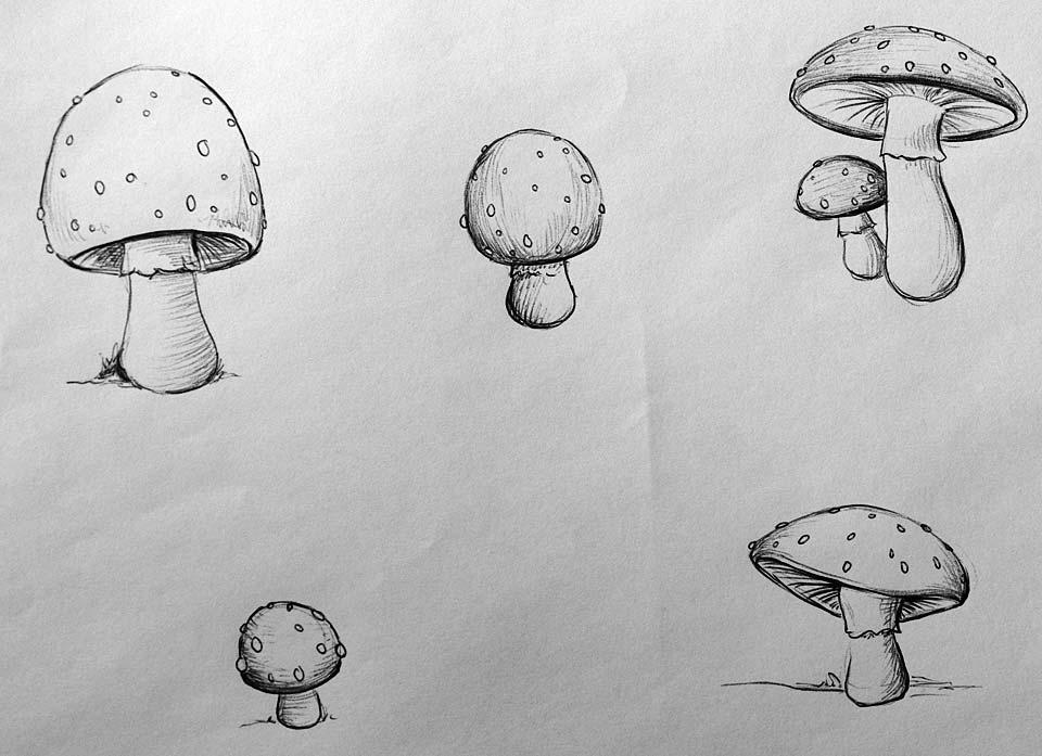 Eine ganze Seite Pilze mit verschiedenen Hüten.