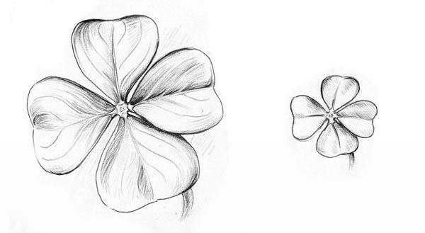 Das vierblättrige Kleeblatt - Die Zeichnung mit Kugelschreiber