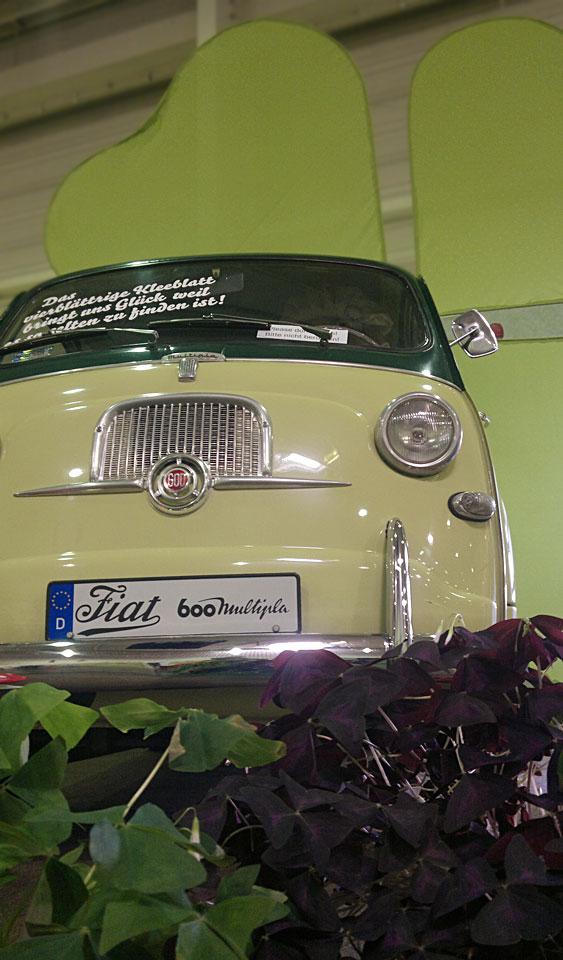 Der Fiat Multipla im Klee.