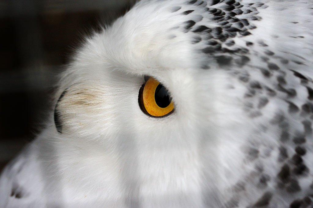 Hedwig sahs im Gehege und beobachtete alles ganz genau