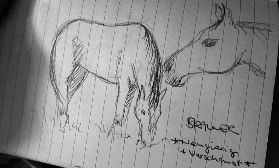Bei einem Feldspaziergang ein Pferd kennengelernt.