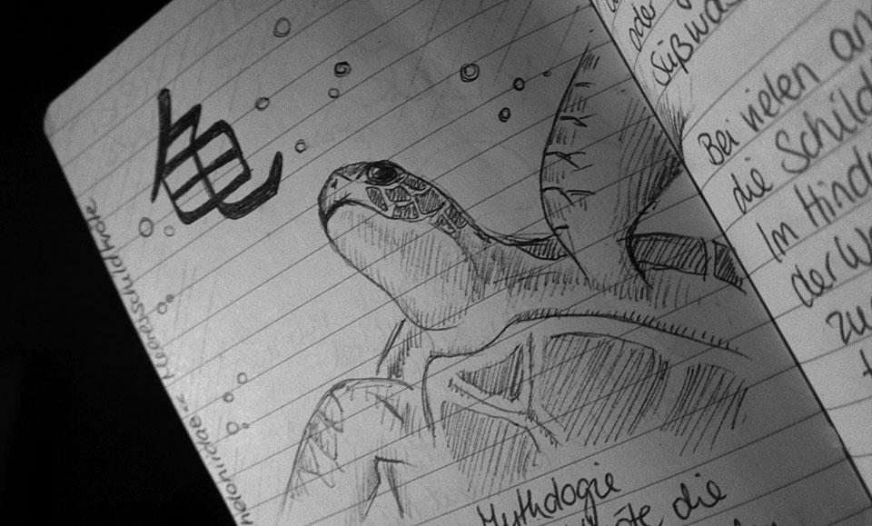 Cheloniidae - Meeresschildkröte