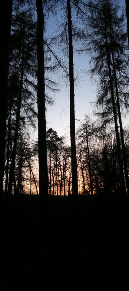 Mitten im Wald im Moos sitzen...