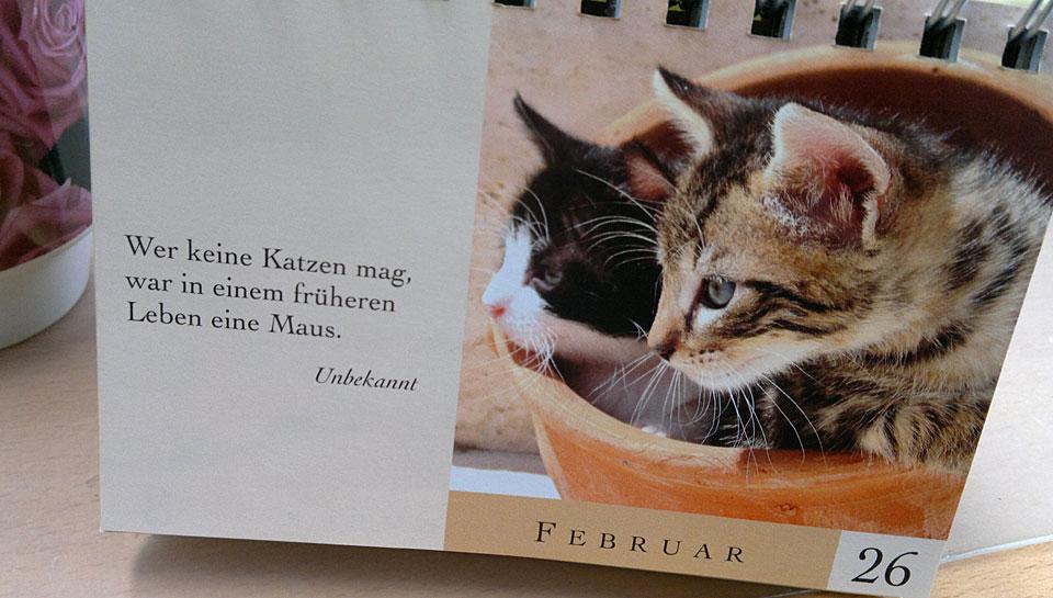 Wer Katzen nicht mag... - Wie kann man denn Katzen nicht mögen?