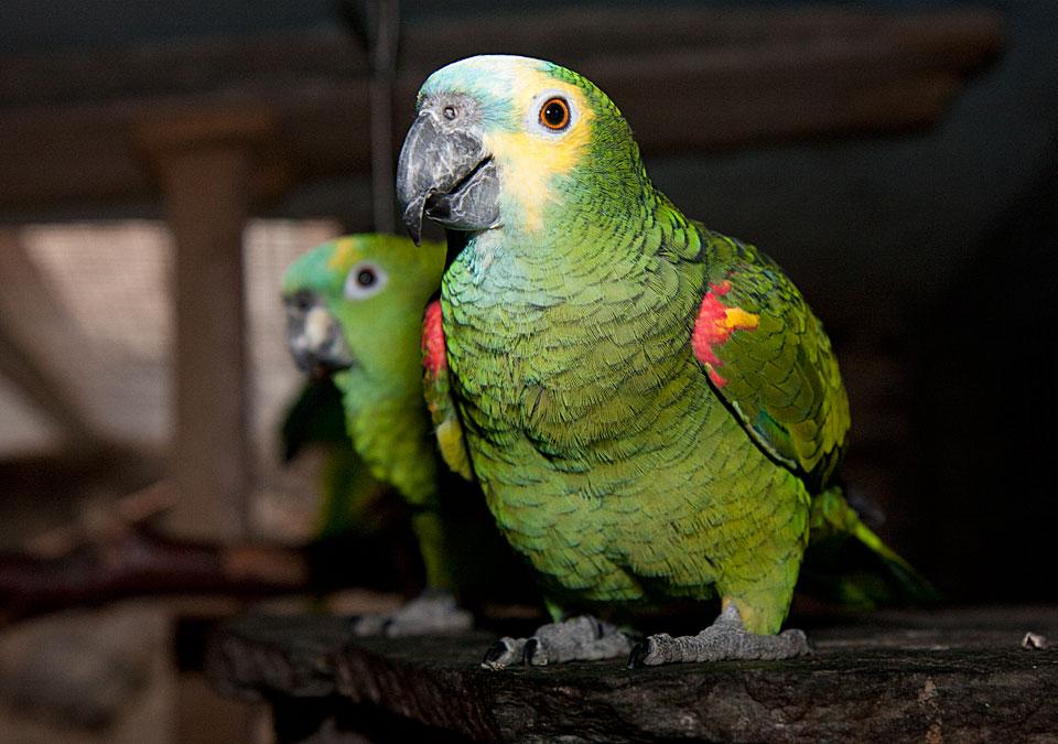 Zwei neugierige Amazonen