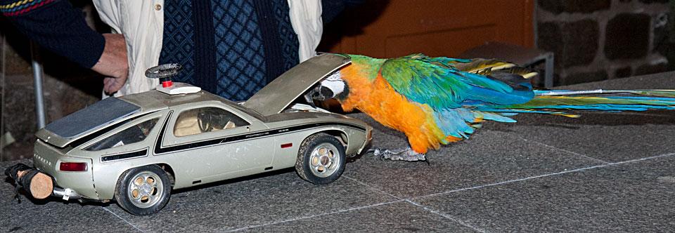 Niki beim Motor-Check des Porsche.