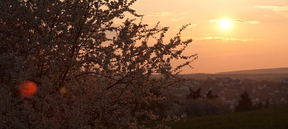 Sonnenuntergang leuchtet in den Frühlingsblüten.
