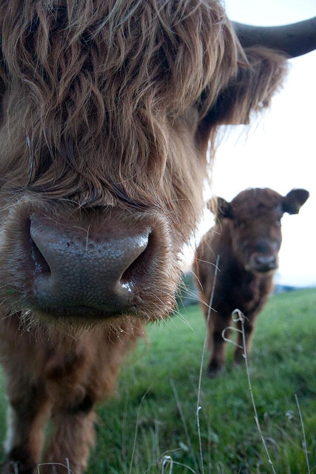 Auch die Nase ist groß und vor allem neugierig.
