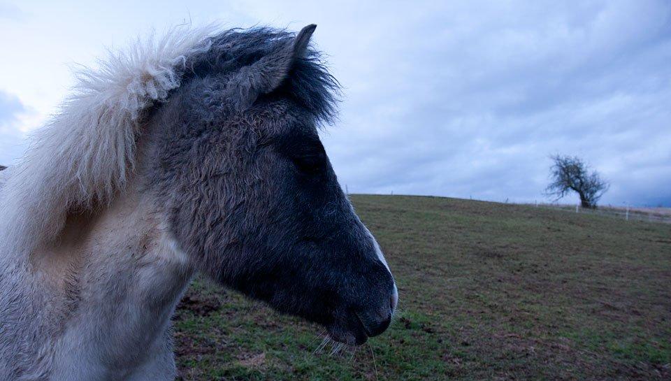 Grau wie das Pony wurde auch ganz schnell der Himmel.
