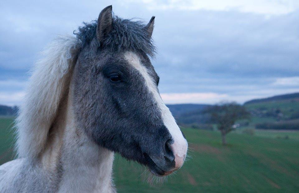 Ein freundliches Pony.