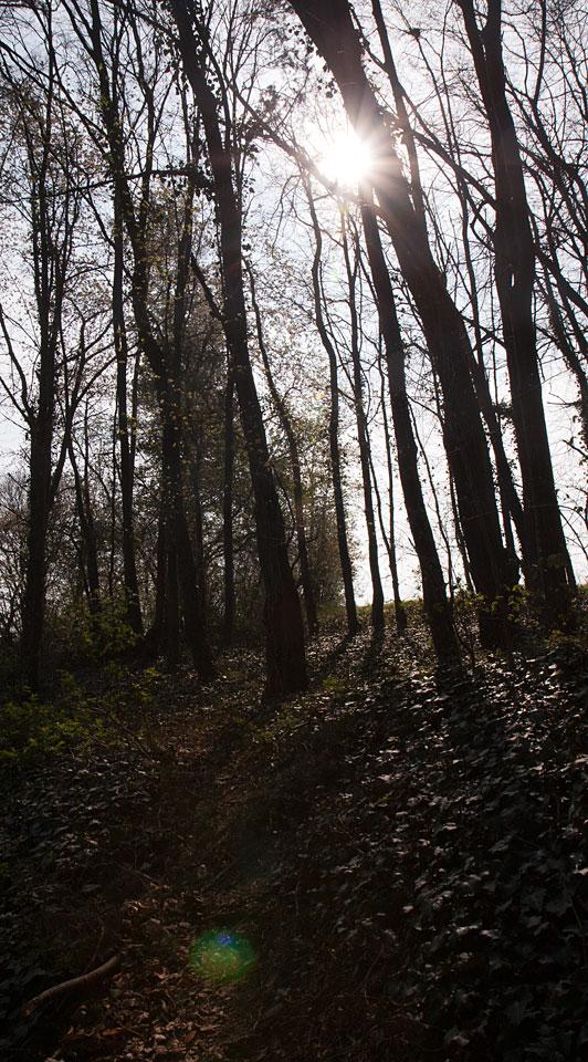 Die ersten Sonnenstrahlen fallen durch die noch unbelaubten Bäume.