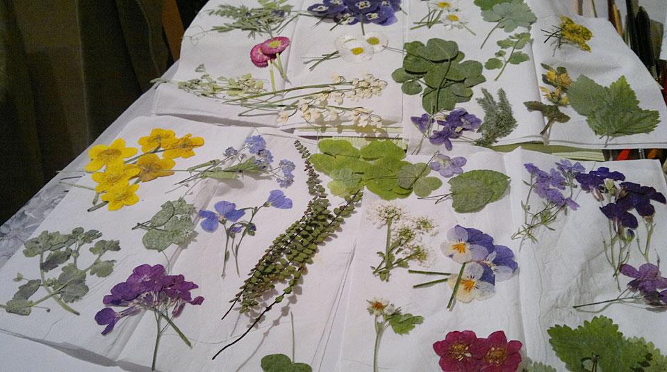 Viel Auswahl - die fertig gepressten Blumen nach gut einer Woche.