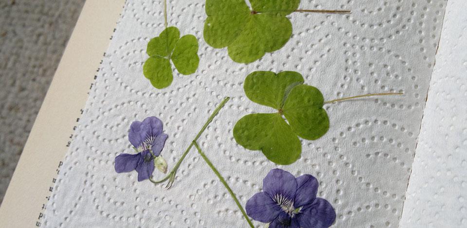 """Leider nun auch """"strukturiert"""": Kleeblätter und Veilchenblüten."""