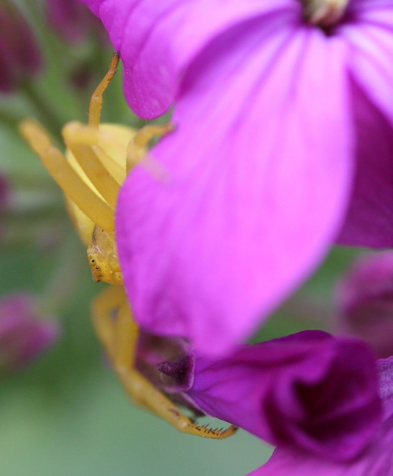 Deswegen verkroch sie sich immer wieder unter dem lilanen Blütenblatt.