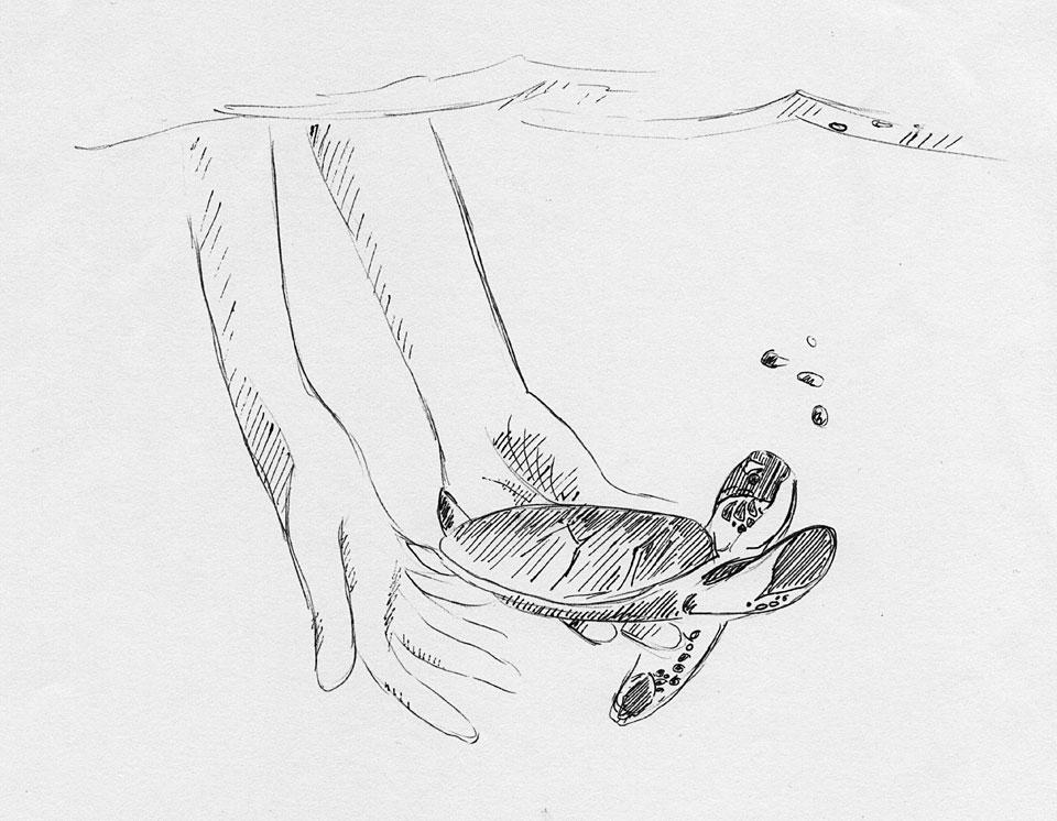 """""""In die Freiheit"""" – Zeichnung nach einer Fotovorlage aus dem Internet."""