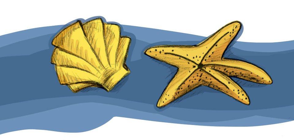 Unter Wasser zu Hause: Muschel und Seestern.