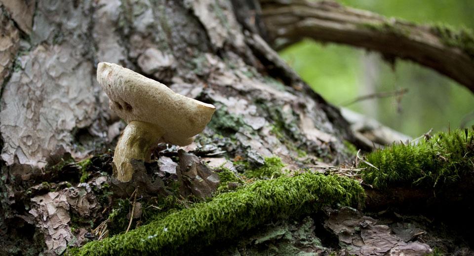 Ein Pilz am Fuße eines Baumes.
