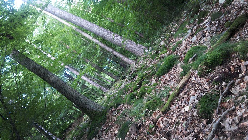 Bergan und Bergab! Zwischen all den Bäumen, Laub, Moos und Schiefersteinen...