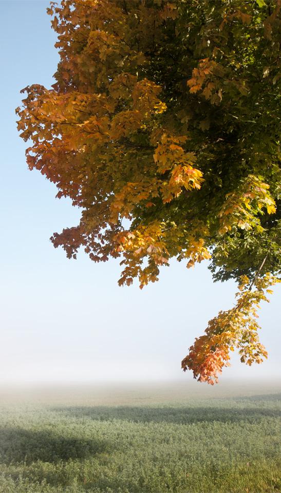 Von strahlendem Grün zu leuchtendem Gelb in feuriges Orangerot.