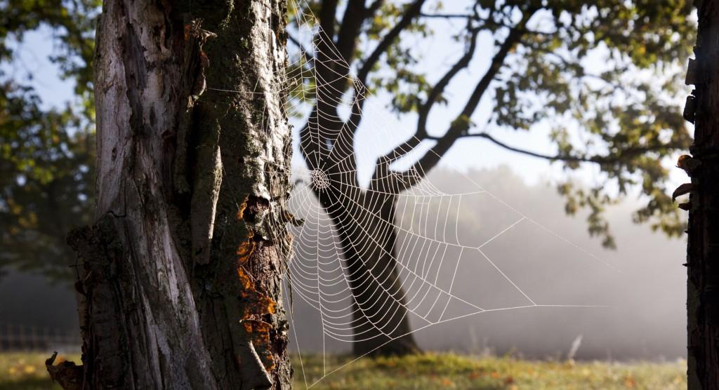 Gefangen –Morgentau im Spinnennetz.