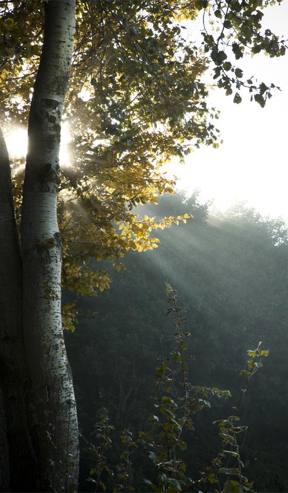 Jeden einzelnen Sonnenstrahl sieht man durch den Nebel gleiten.