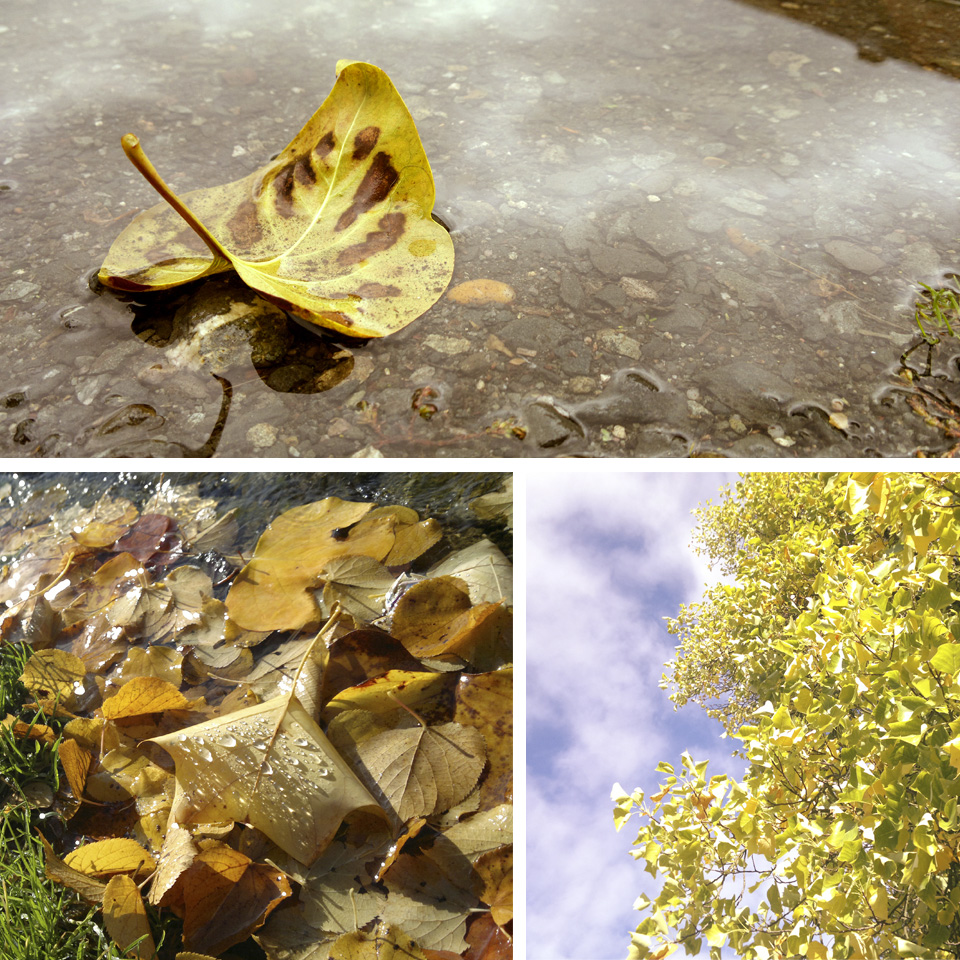 Ein paar Herbstbilder –einige gabs ja auch hier schon zu sehen.