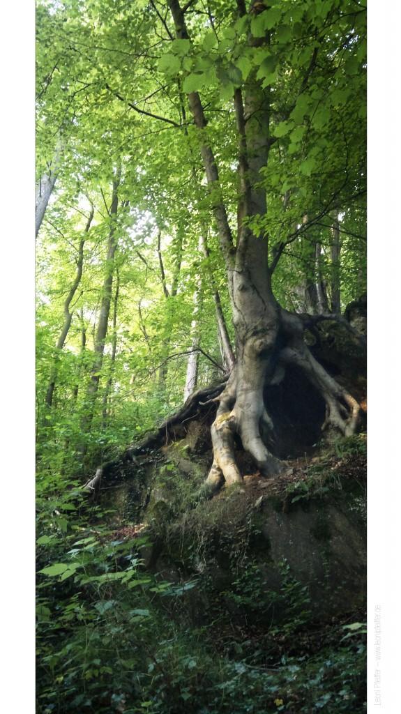 Hat gewonnen: Ein spezieller Baum in Abendstrahlen, die durch das Laub fallen.
