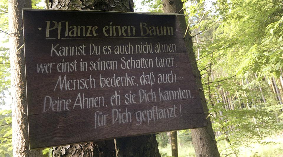 """""""Pflanze einen Baum"""""""