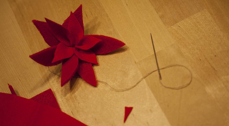 Die fertige Blüte des roten Weihnachtssterns.