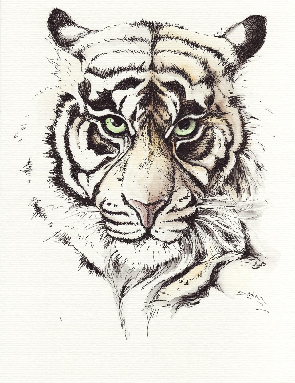 """""""Schau mir in die Augen, Kleines"""" –Tiger in Tusche mit etwas Aquarellfarbe."""