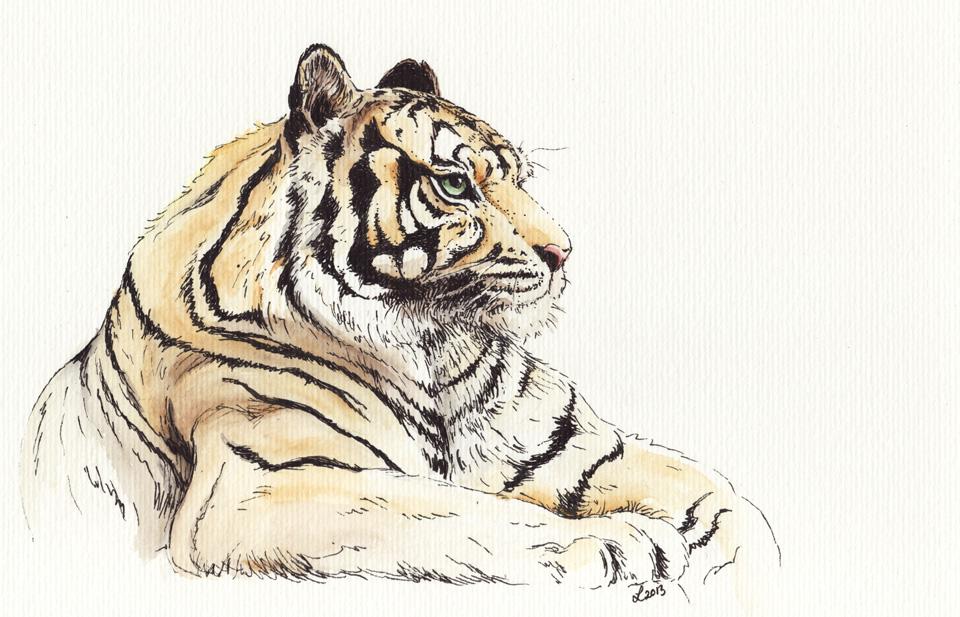 Tigerstreifen in Farbe.