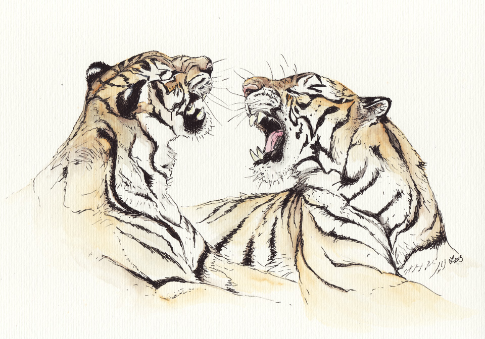 Die zwei Tiger nun auch in Farbe –Coloration mit Aquarellfarbe.