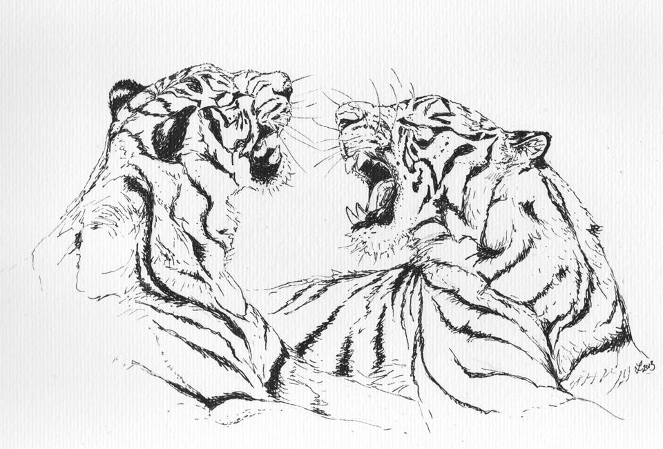Schwarz/Weiß –Tuschezeichnung der beiden Tiger abgeschlossen.