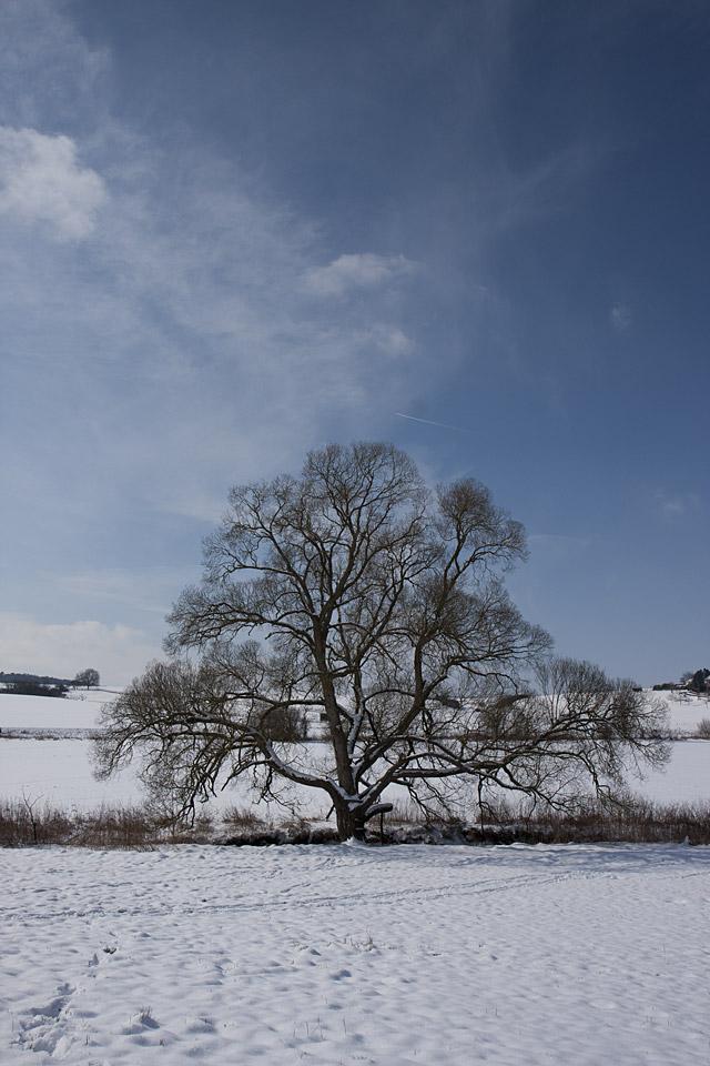 Mächtig überdacht dieser Baum die Bach.