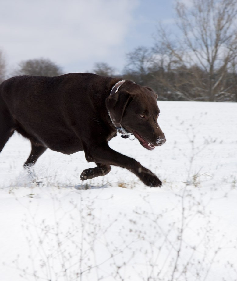 Viel Freude im Schnee mit Luna…