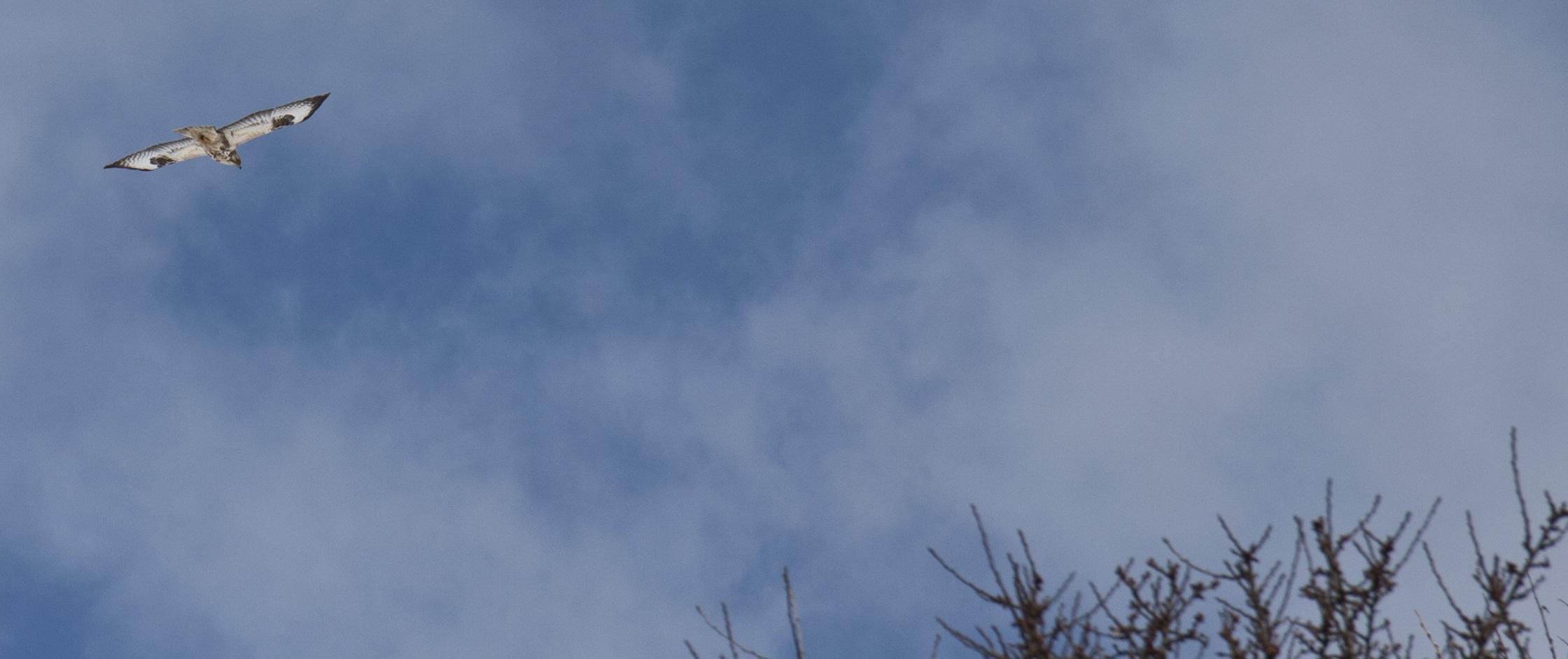 Hoch oben in den Wolken…