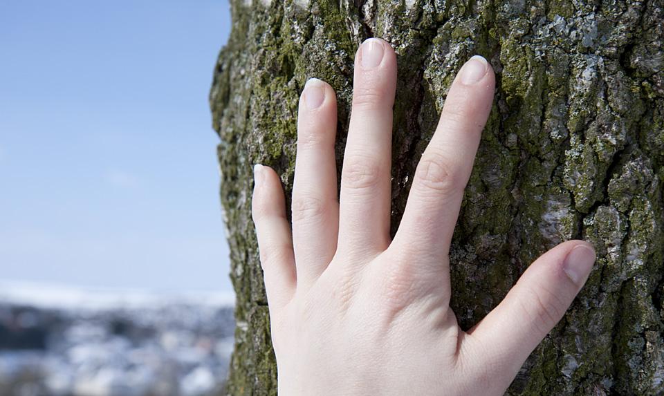 Der Baum –voller Leben und Wärme.