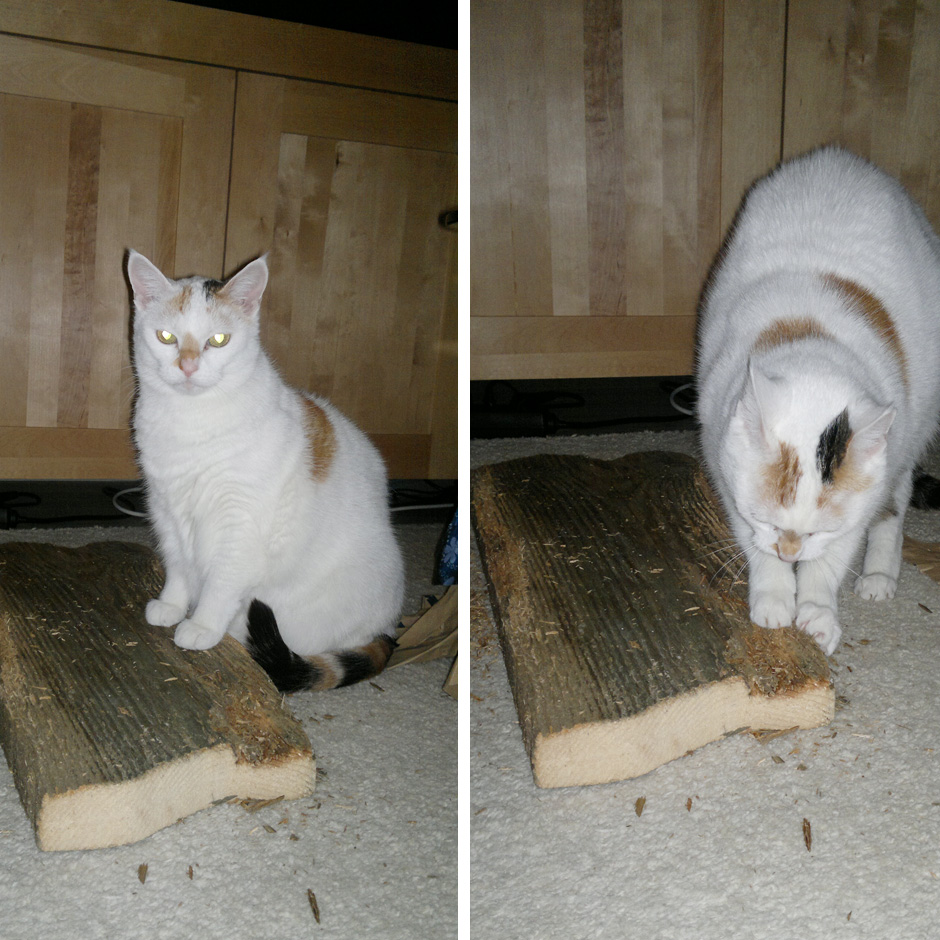 Lucy und ihr neues Kratzbrett –das erste, dass sie auch benutzt.