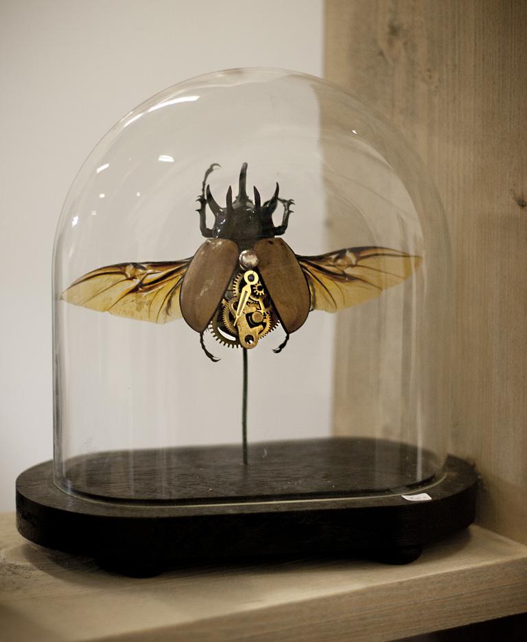 Tick-Tack-Käfer