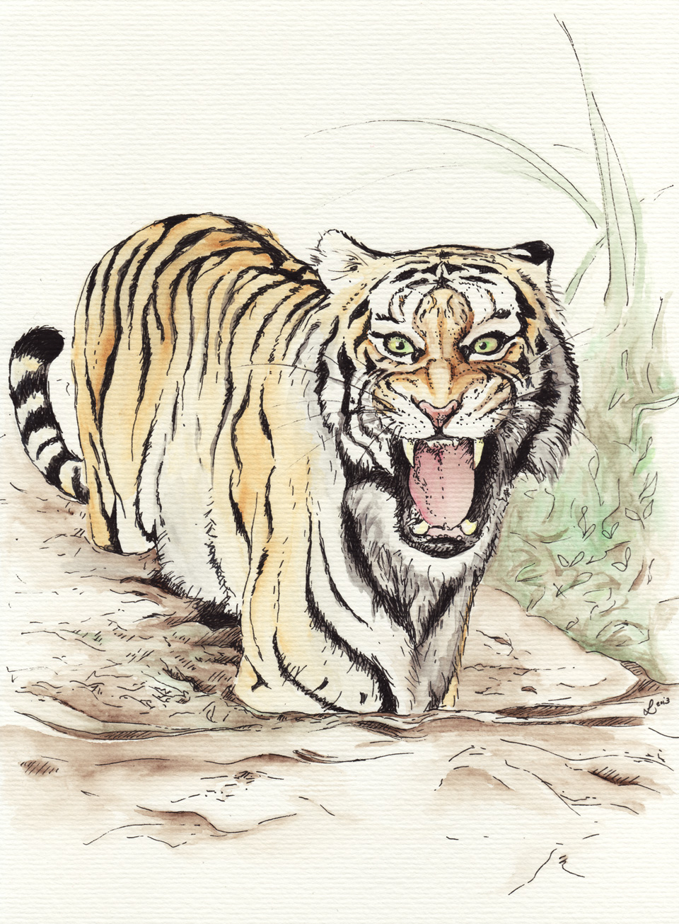"""Grrrrroarrrr!"" –Tiger im Wasser."