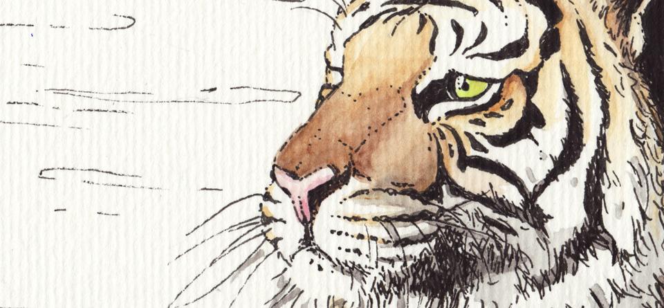 Was sieht der Tiger?