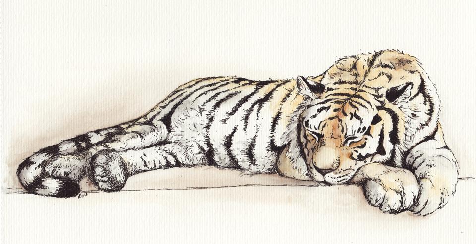 """""""Sleepy Tiger"""""""