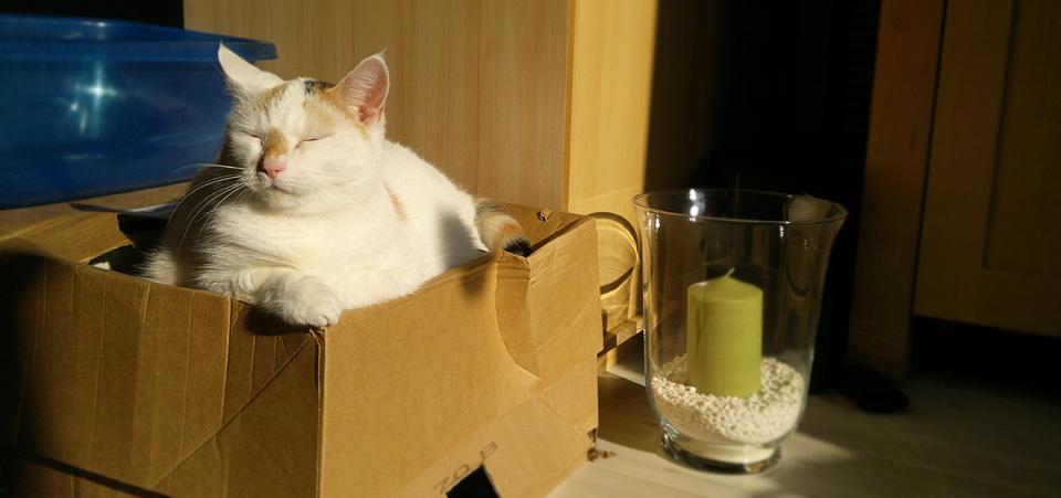 Katzen und Kisten – bis die Sonne ganz rund gewandert ist…