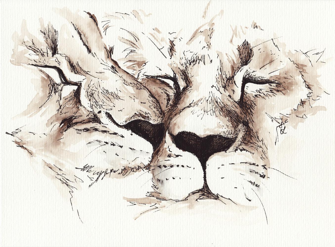 Fertig – zwei zärtlich kuschelnde Löwen.