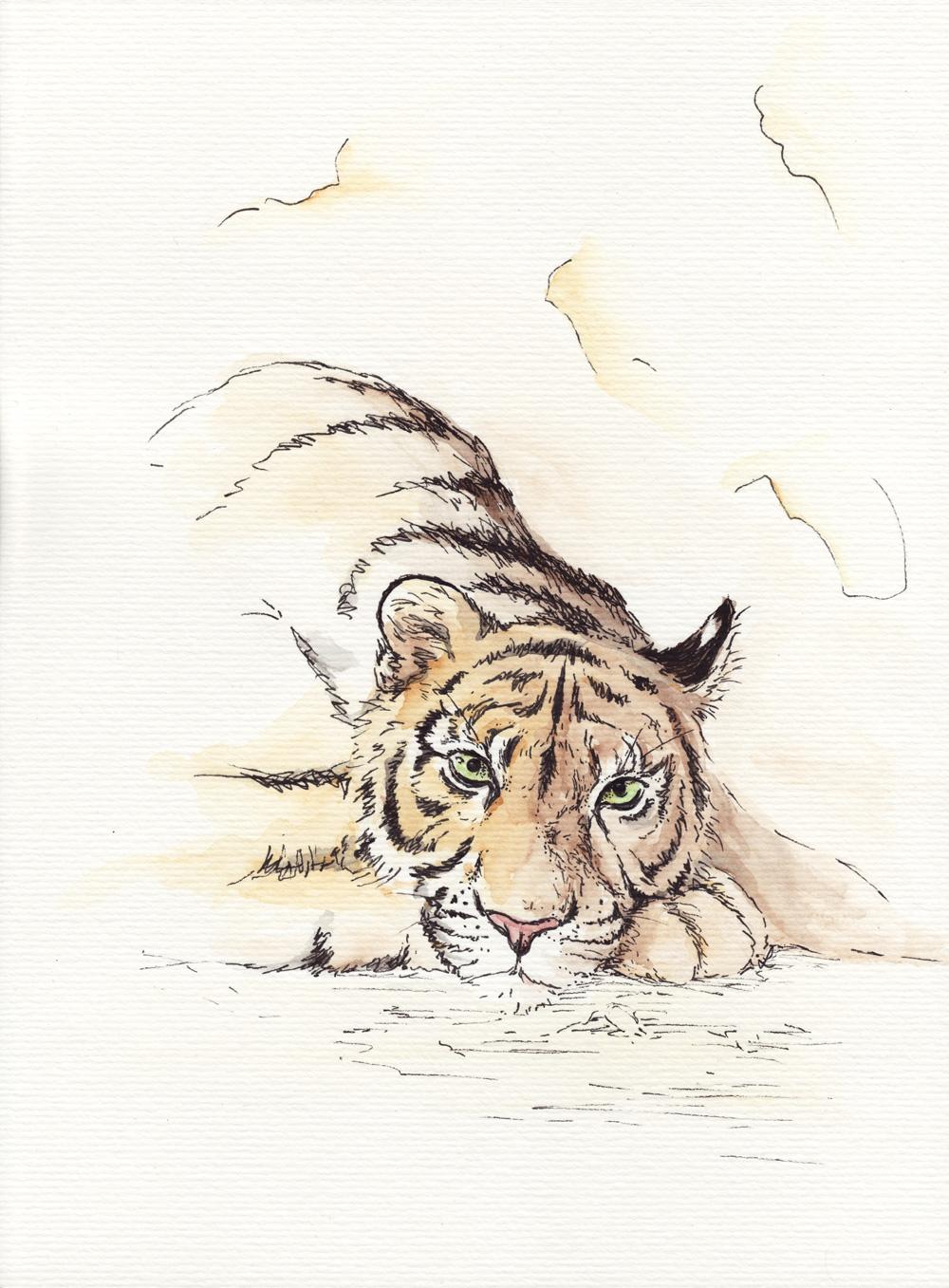 Sehr sachte mit Aquarellfarbe coloriert – Der müde Tiger.
