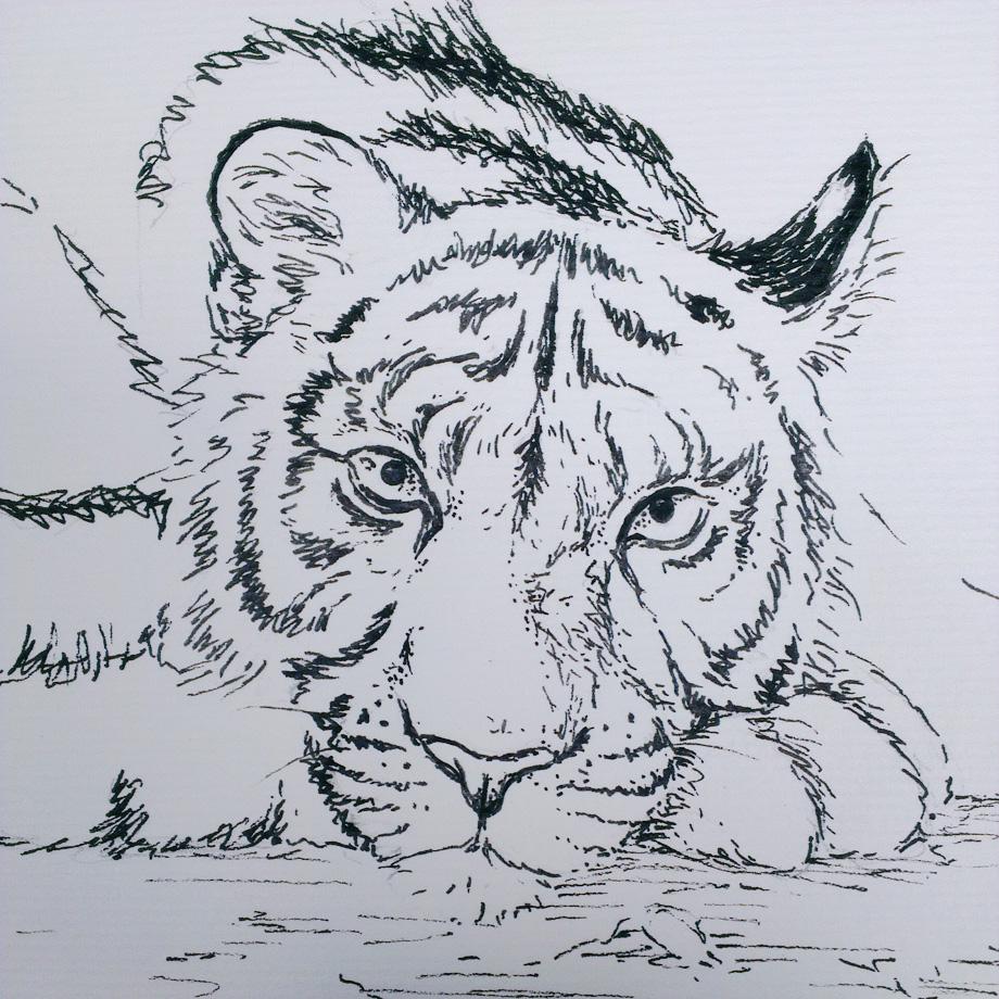 Tuschezeichnung des Tigers.