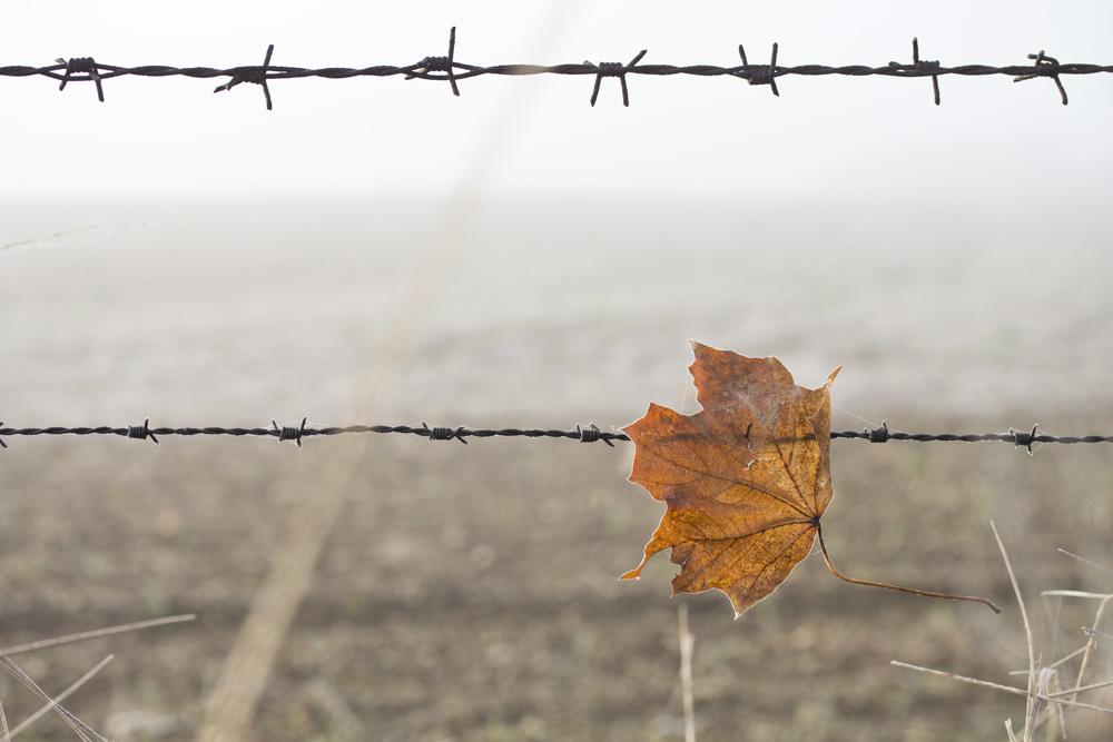 Ein Zaun im Nebel und ein gefangenes Blatt.
